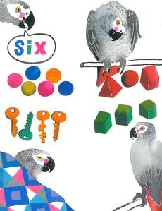 alex the parrot illustration meilo so