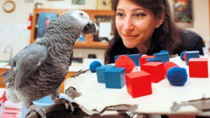 Irene Pepperberg and Alex the Parrot