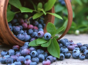 bilberry-fruit