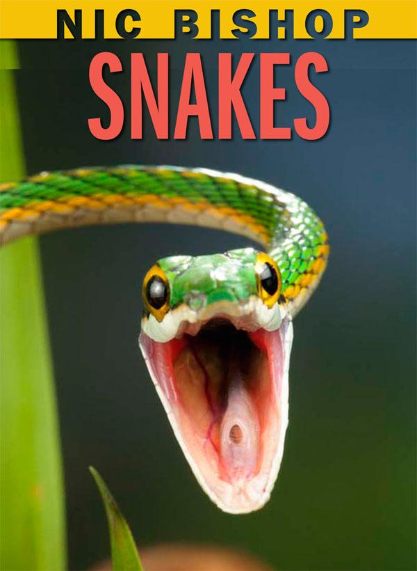snakes cover image