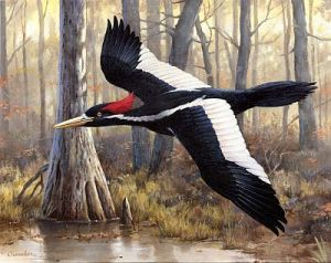 An ivory billed woodpecker --pivotal to the plot.