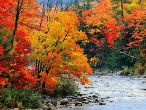jack-hollingsworth-stream-in-autumn-woods from allposters dot com