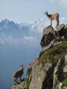 Tobias hunts the chamois.