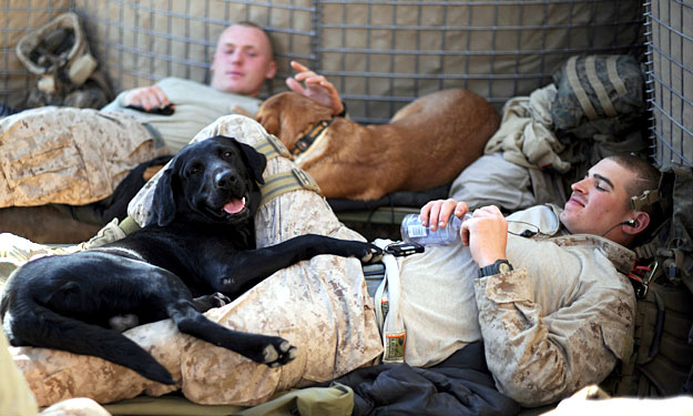 dogs in afghanistan from dogspired dot com