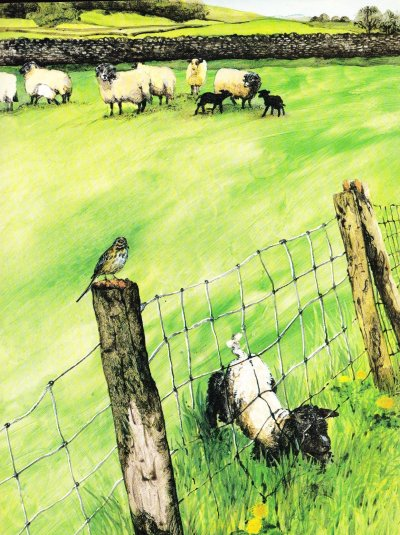 smudge the little lost lamb illustration ruth brown 001