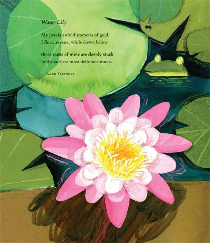 water lily by ralph fletcher illustrated by melissa sweet