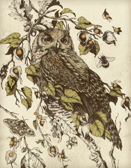 great horned owl by teagan white