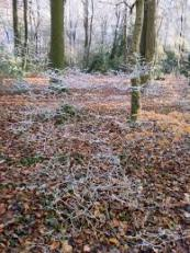 rectory wood from amershamsociety
