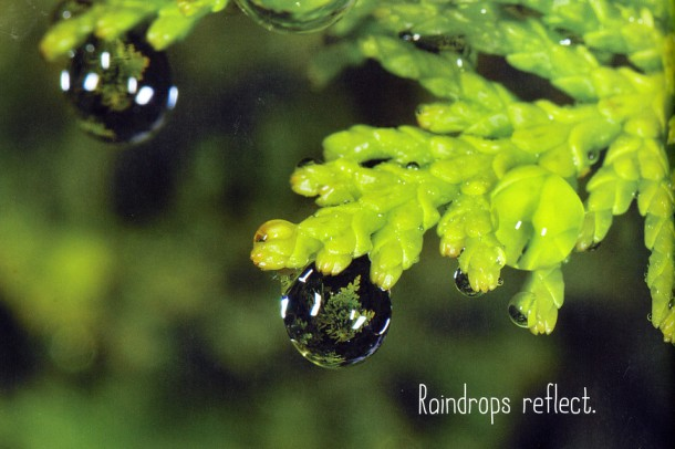 raindrops roll photo by april pulley sayre