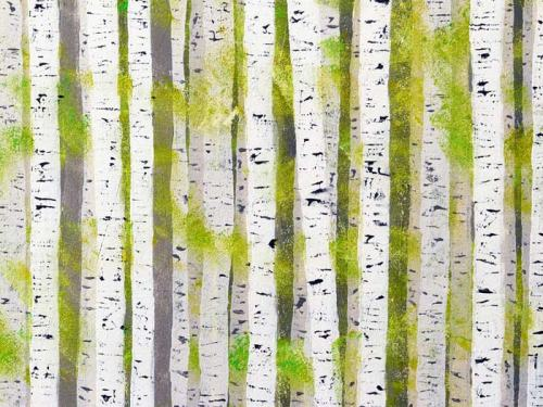 spring birch wood by simon fairless from simonsgallery dot com