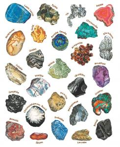 a rock is lively illustration sylvia long