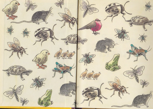 snake and lizard endpapers gavin bishop
