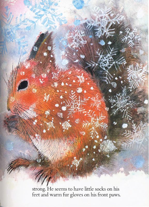 Squirrels illustration2 Brian Wildsmith
