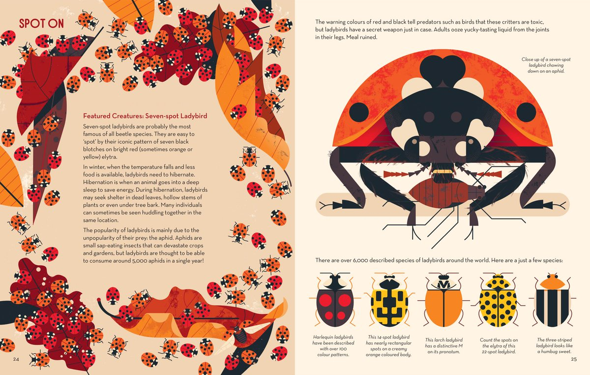 bonkers about beetles interior2 by Davey