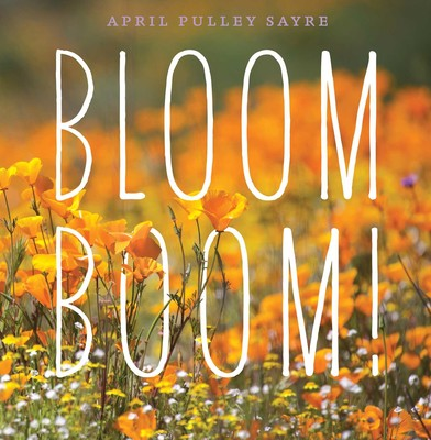 bloom boom cover image