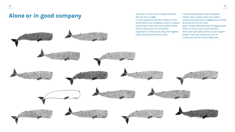 a book about whales Antinori