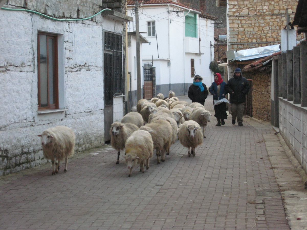 Animals_on_the_main_street_of_village_Lin,_Albania_(6851580053)
