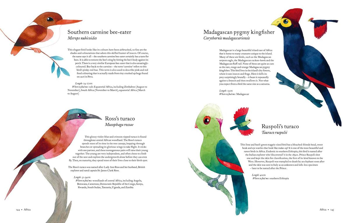 atlas of amazing birds Matt Sewell