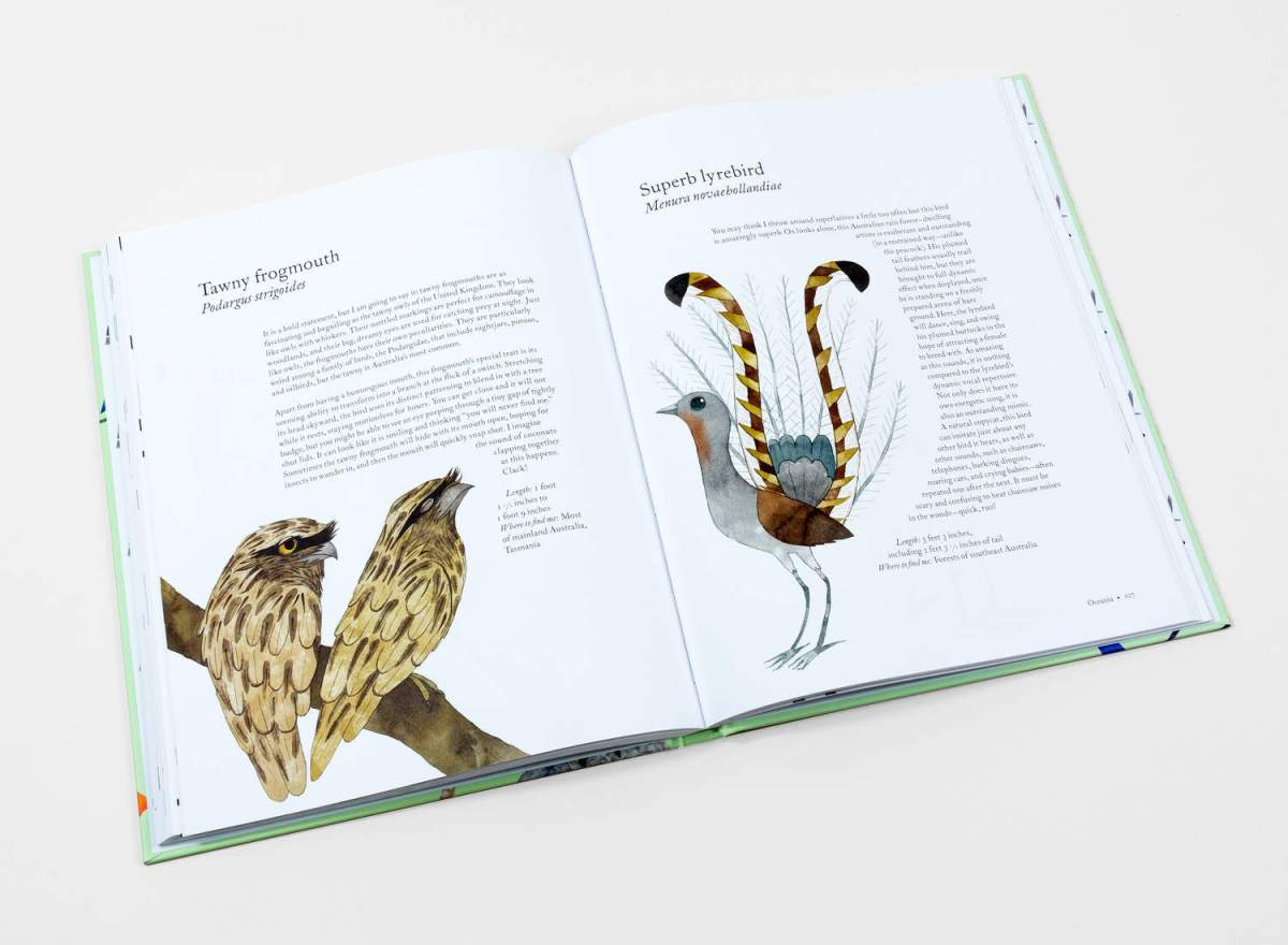 atlas of amazing birds2 Matt Sewell