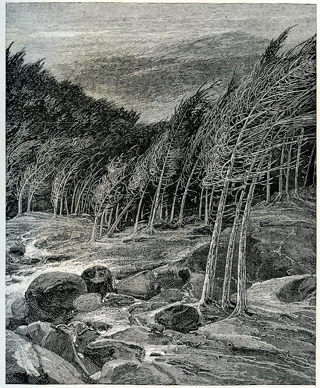 sketch by John Muir