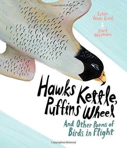 hawks kettle puffins wheel